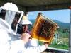 apiculture09