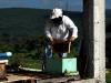 apiculture10