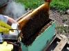 apiculture14