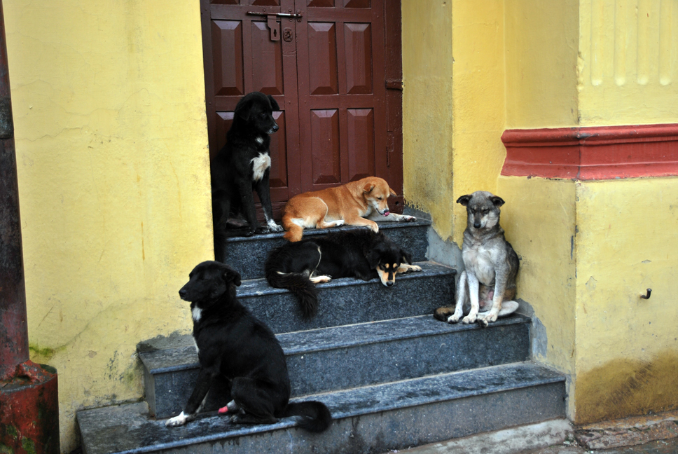 dogs, everywhere