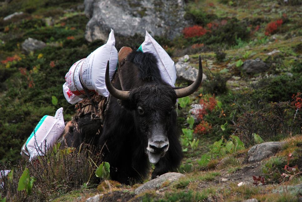 yak long-haul