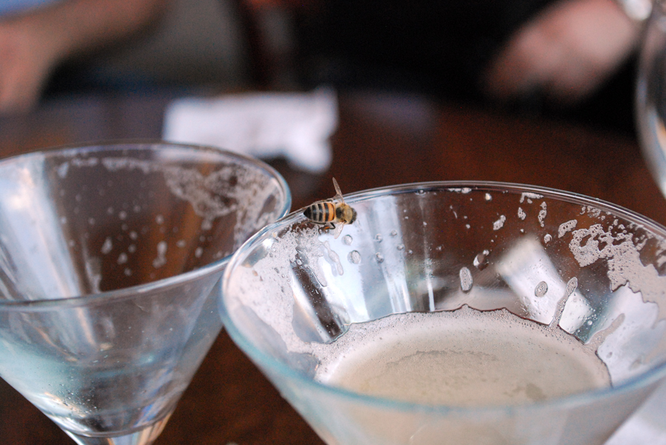 Bee at the bar