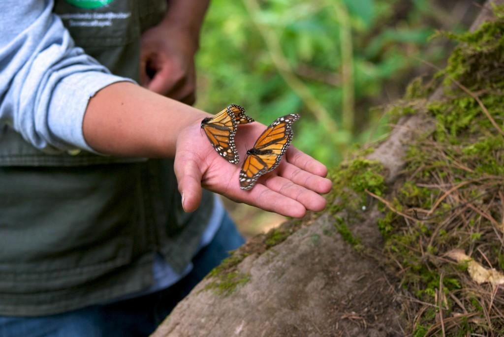 monarchs54