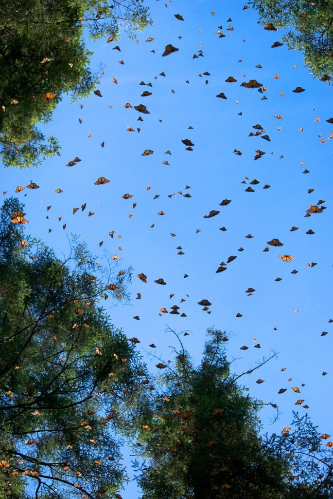 monarchs69