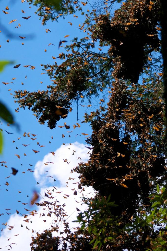 monarchs78