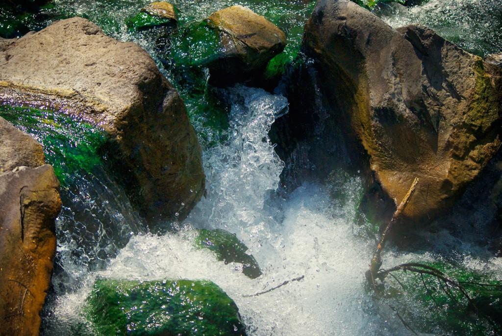 bosque16