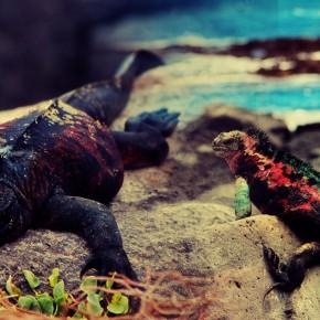 Iguana War 2012, Round 3