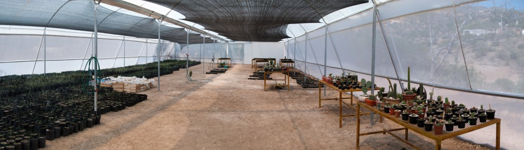 2012Apr-plantamadre-pano2