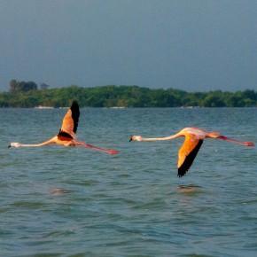 Yucatan Peninsula - Day 5 - Rio Lagartos