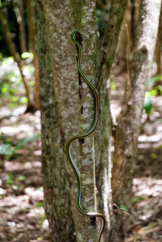 cenotes-14