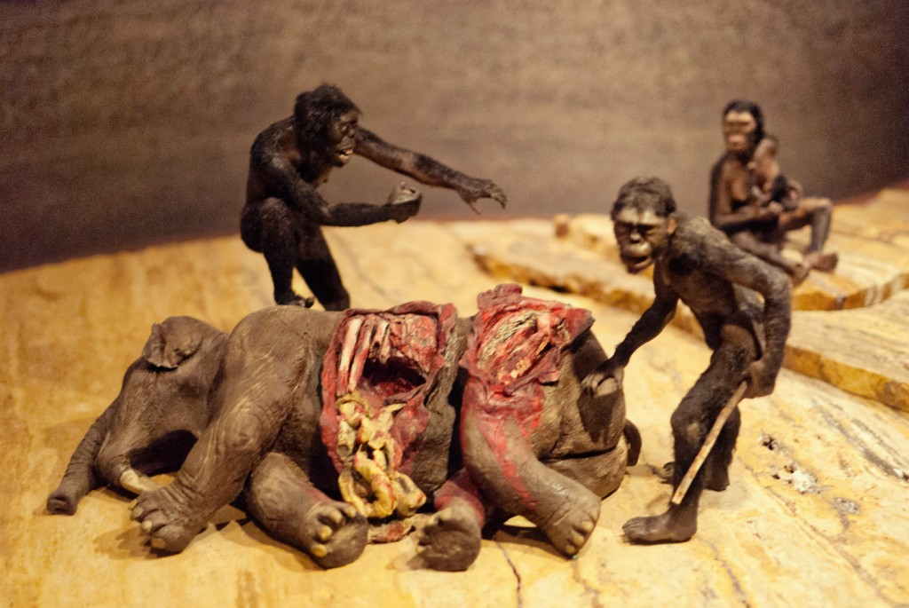 anthropology-museum-5