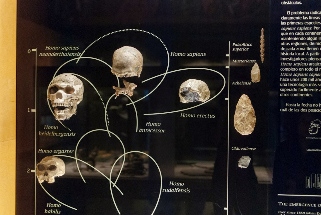 anthropology-museum-6