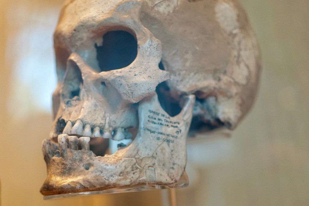anthropology-museum-7