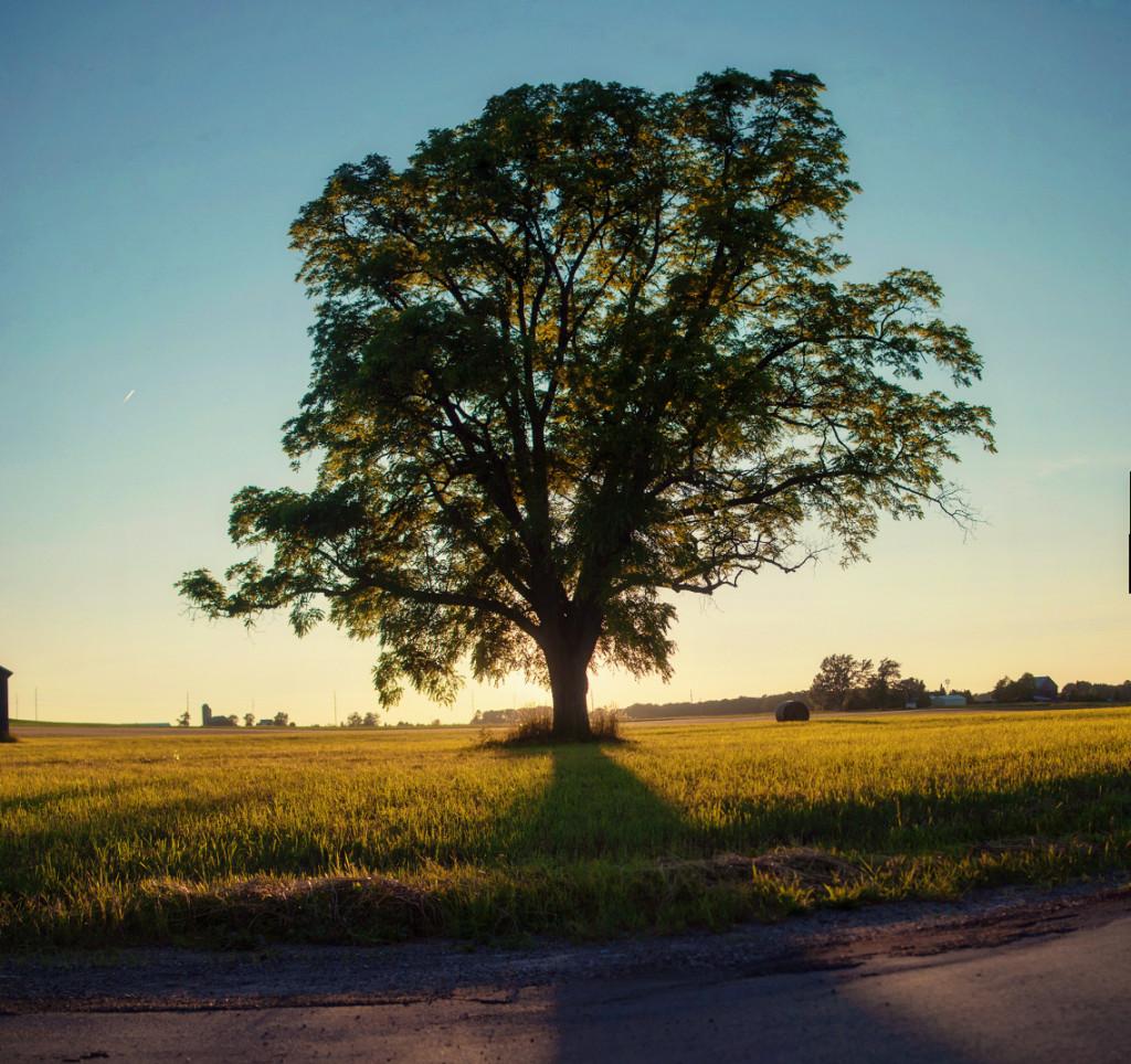 MI_tree1_alt1