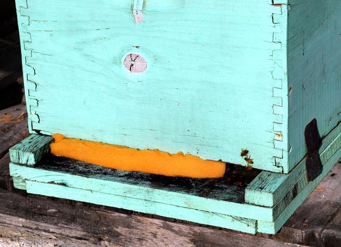 apiculture04