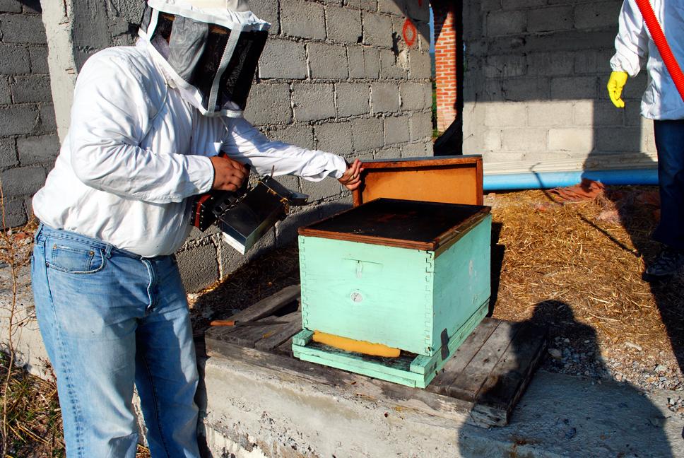 apiculture05