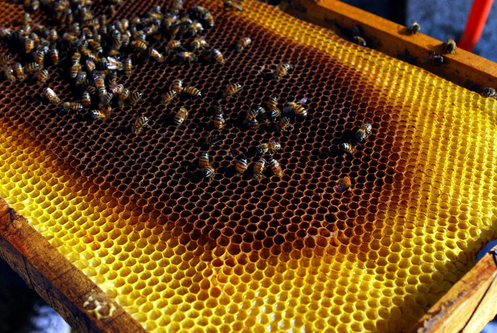 apiculture06