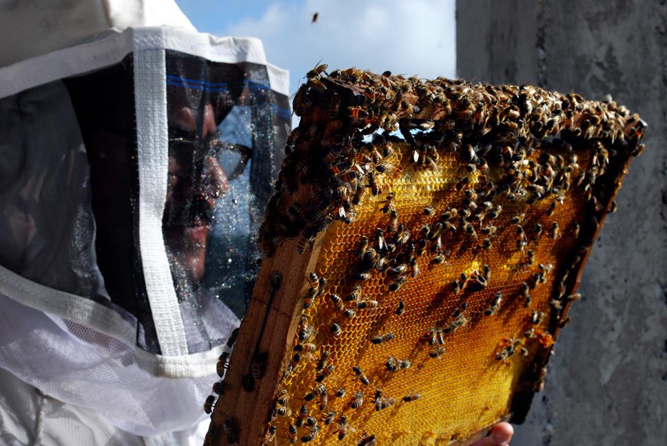 apiculture13