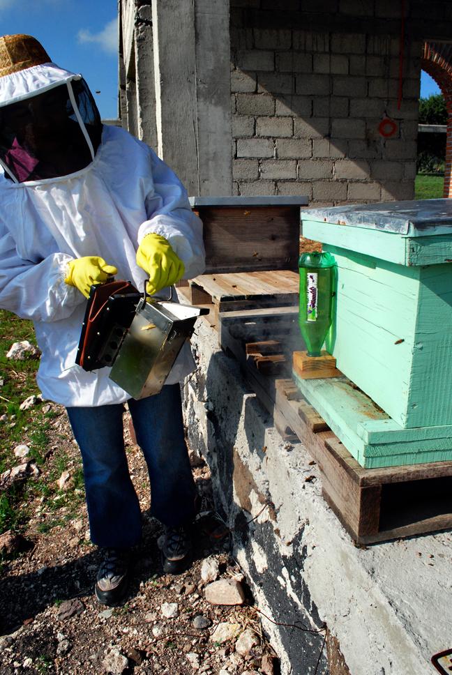 apiculture17