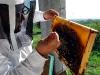 apiculture15