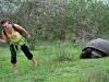 Tortoise attack!
