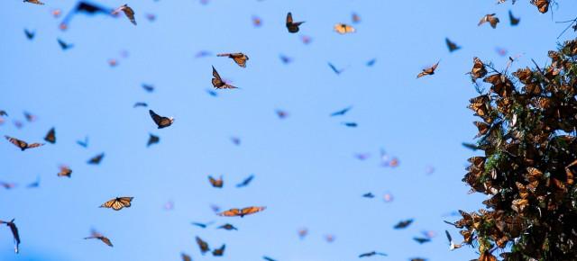 Monarchs, the teaser