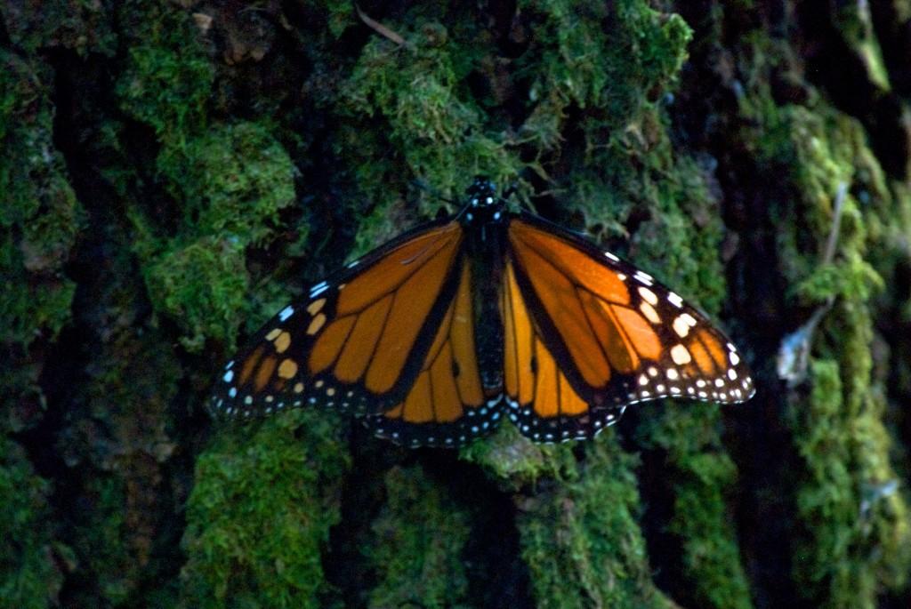 monarchs21