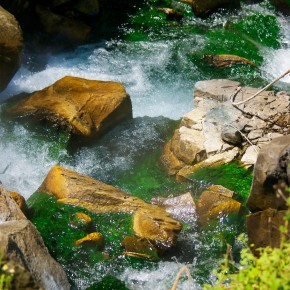 The steaming river, epiphytes, orchids, and bromeliads