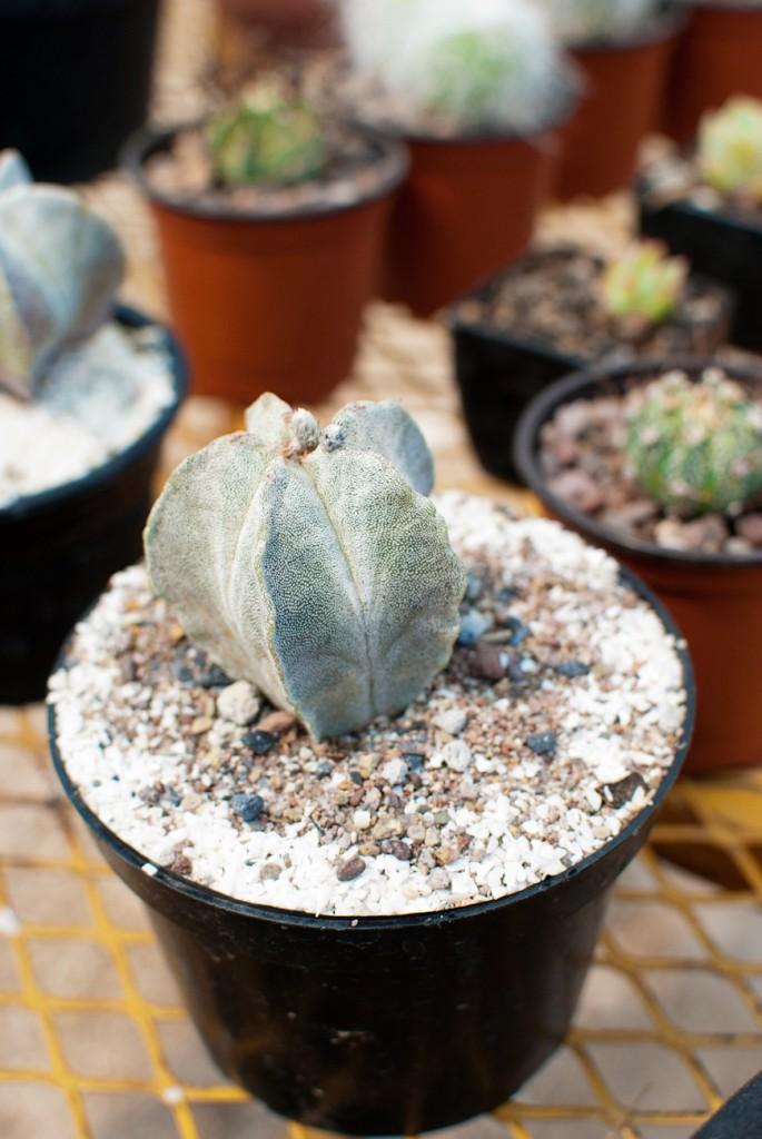 2012Apr-plantamadre-12