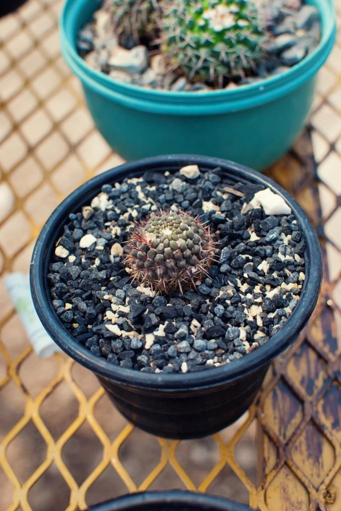 2012Apr-plantamadre-14