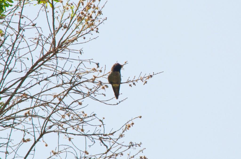 california-birds-1