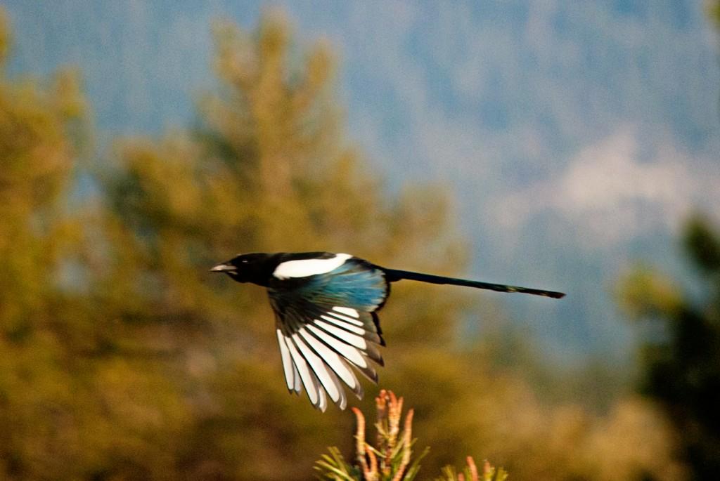 california-birds-10