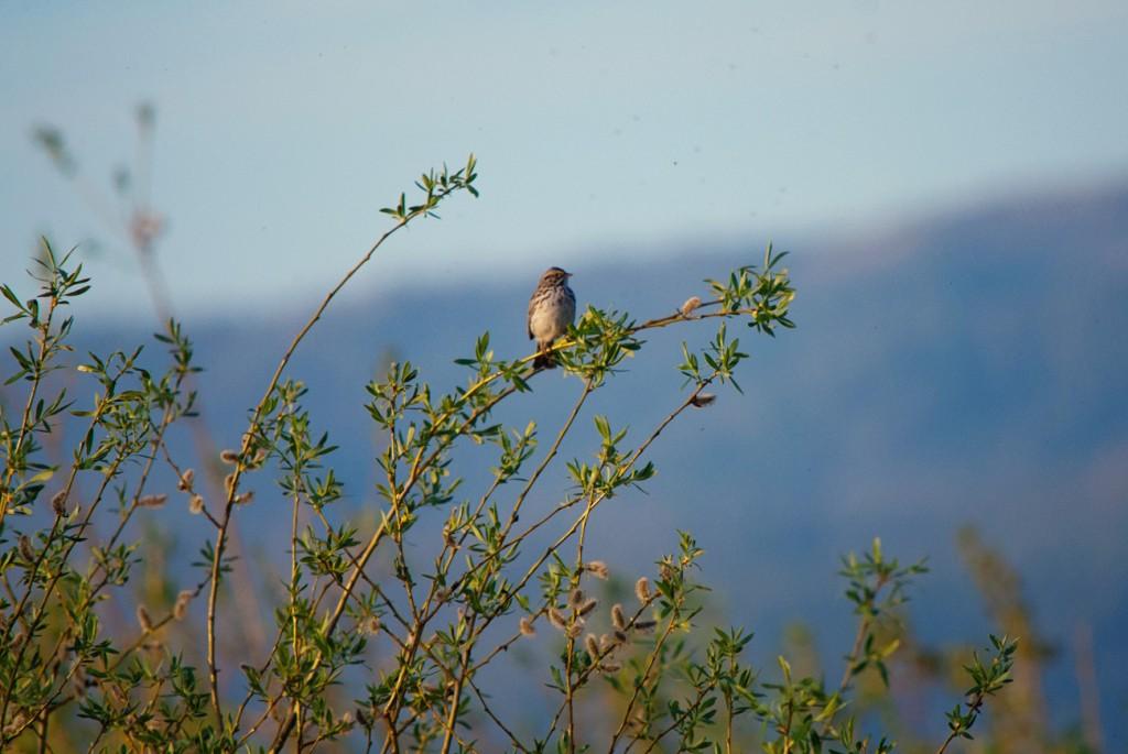 california-birds-12