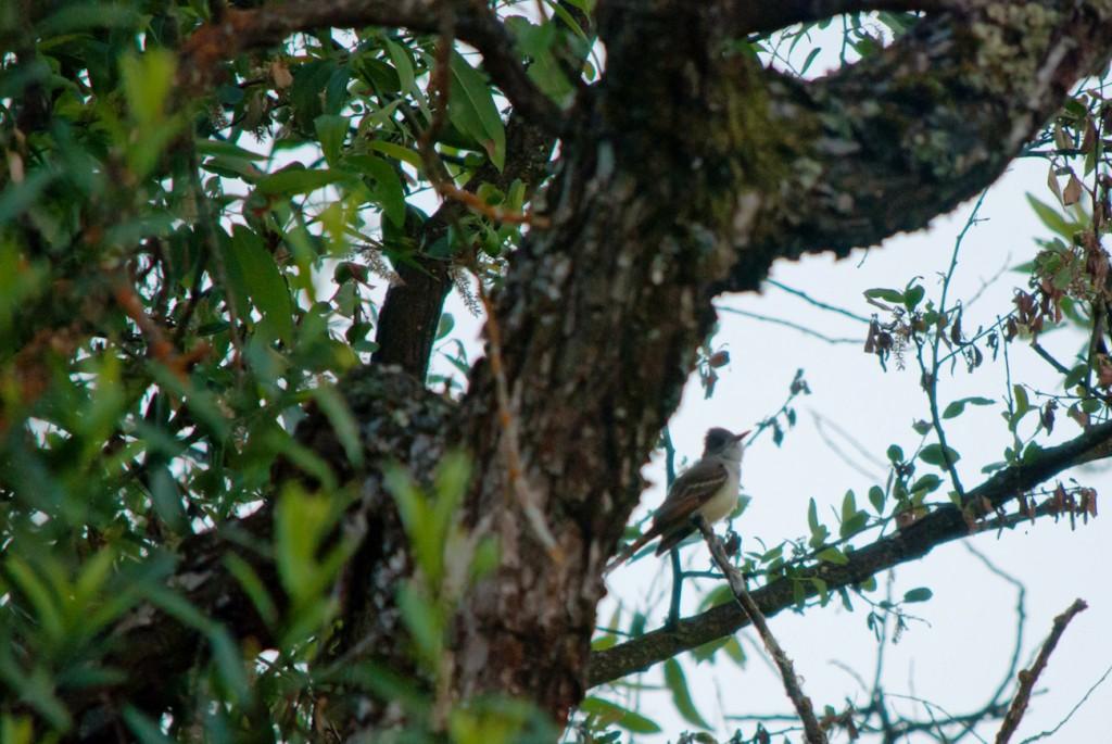 california-birds-16