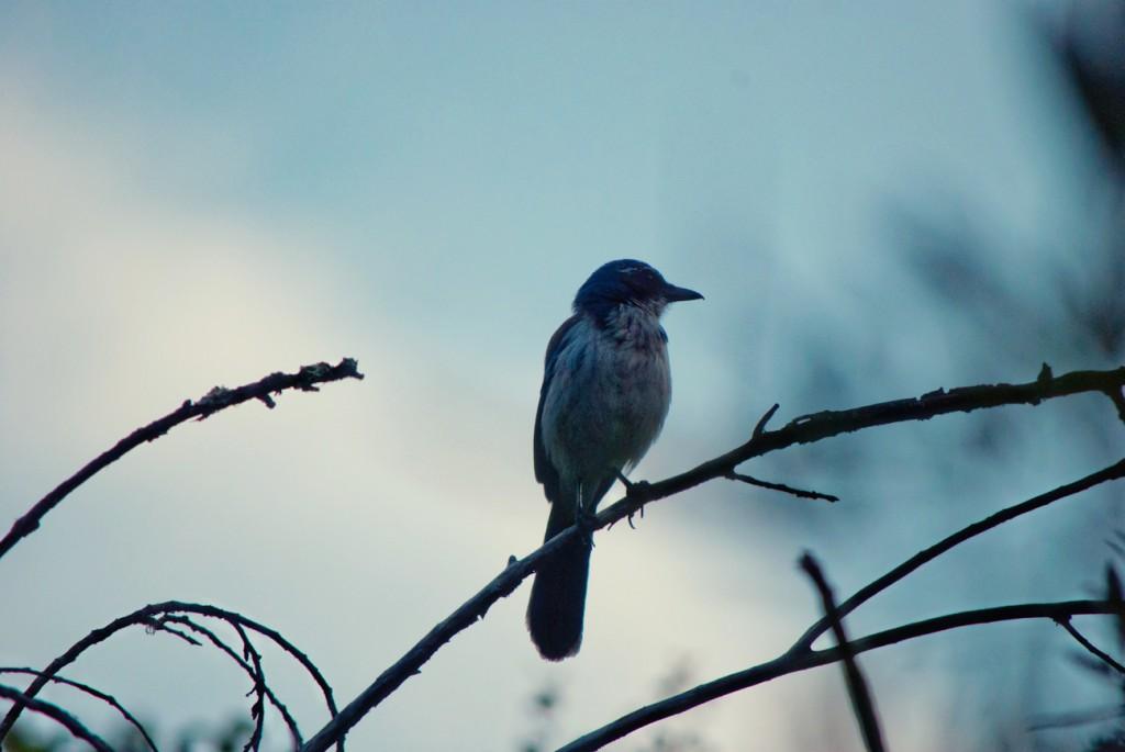 california-birds-17