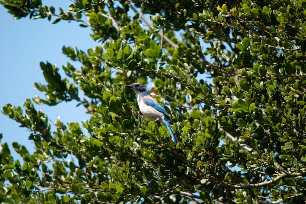 california-birds-2