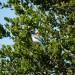 california-birds-2 thumbnail