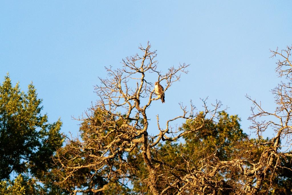 california-birds-20