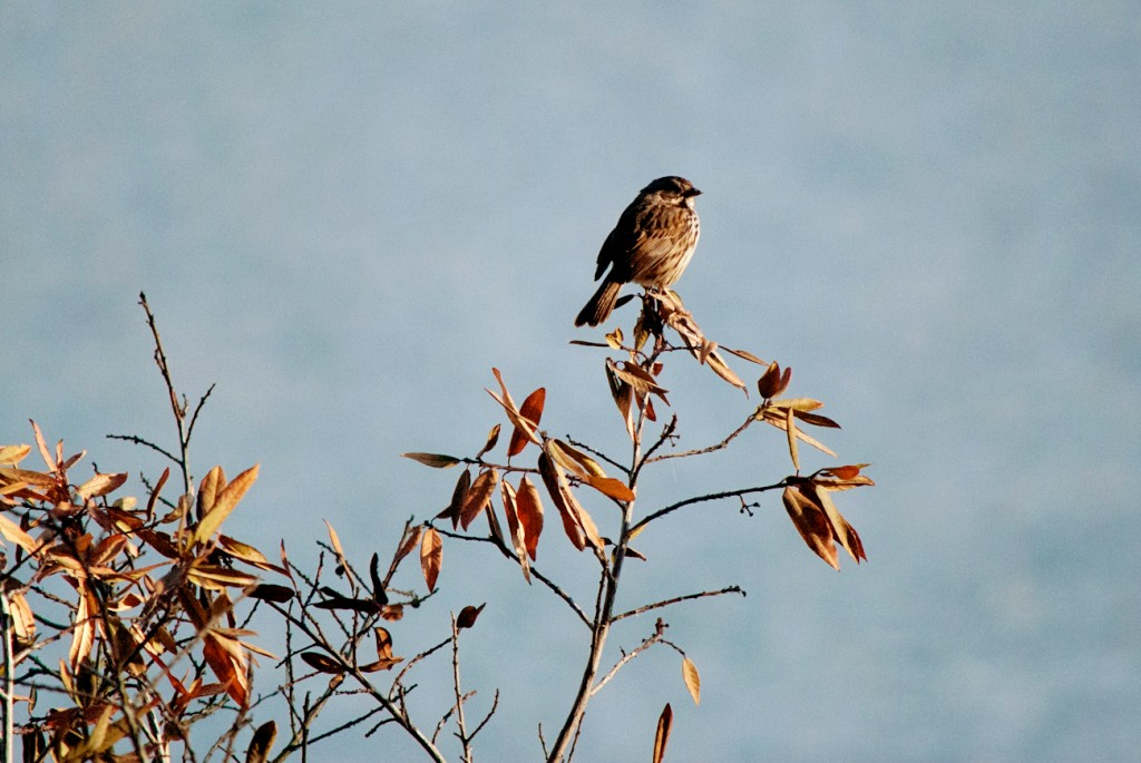 california-birds-21