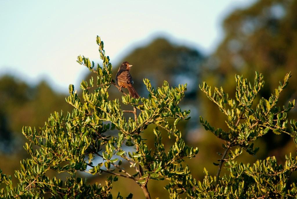 california-birds-23
