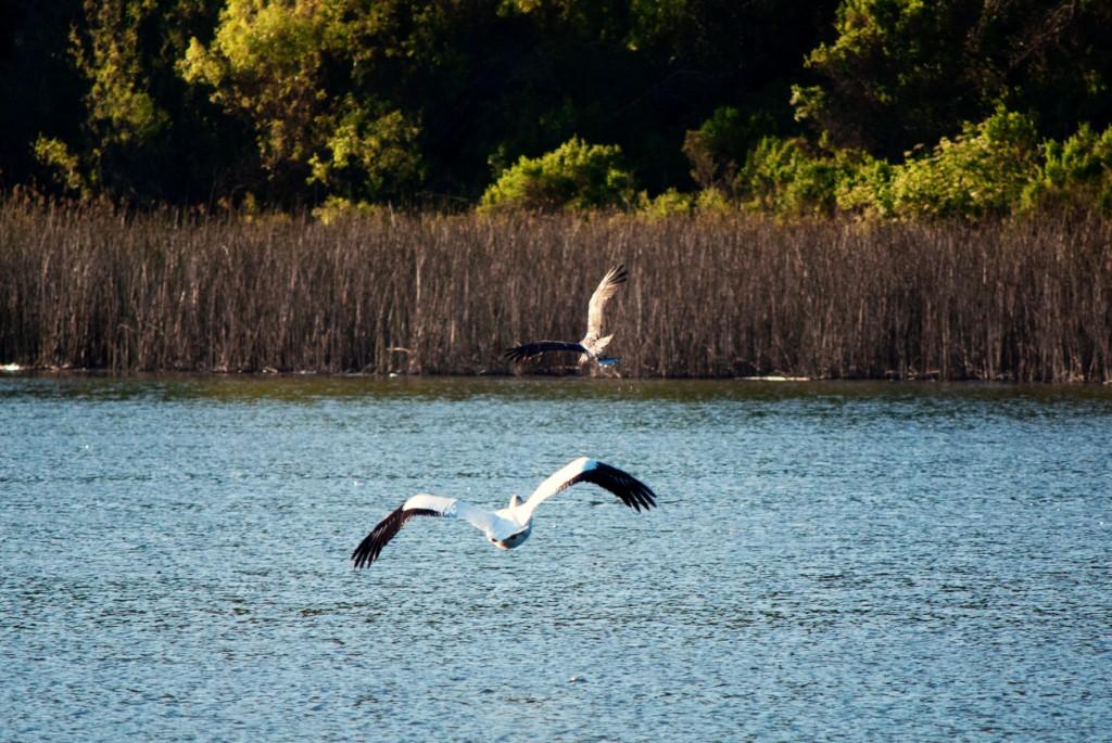 california-birds-25