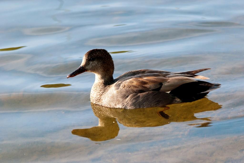california-birds-27