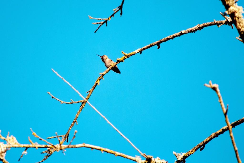 california-birds-29