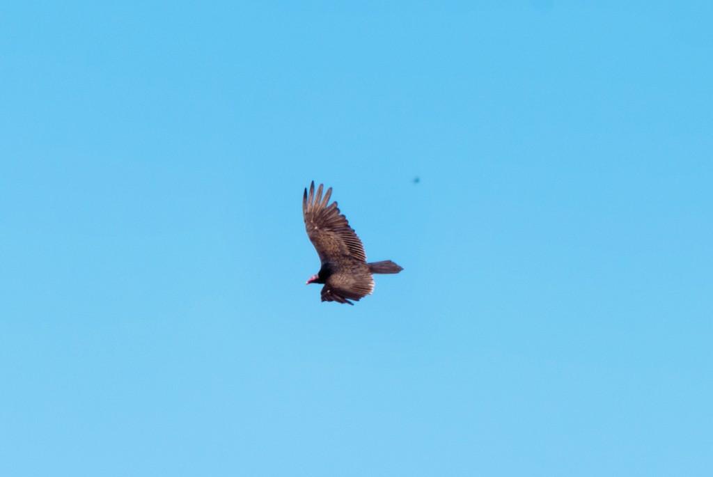 california-birds-3