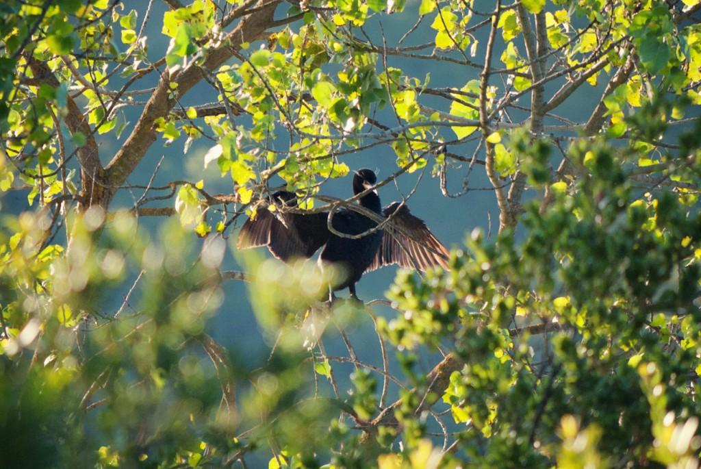 california-birds-31