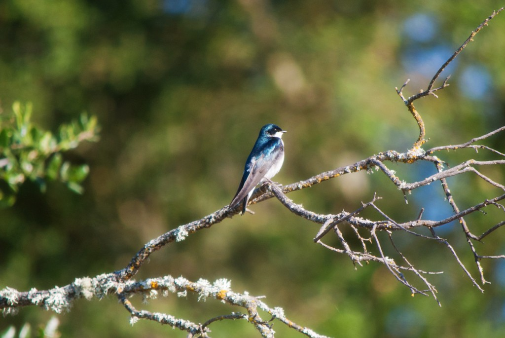 california-birds-32
