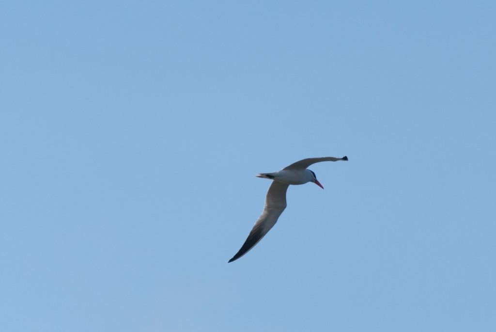 california-birds-33