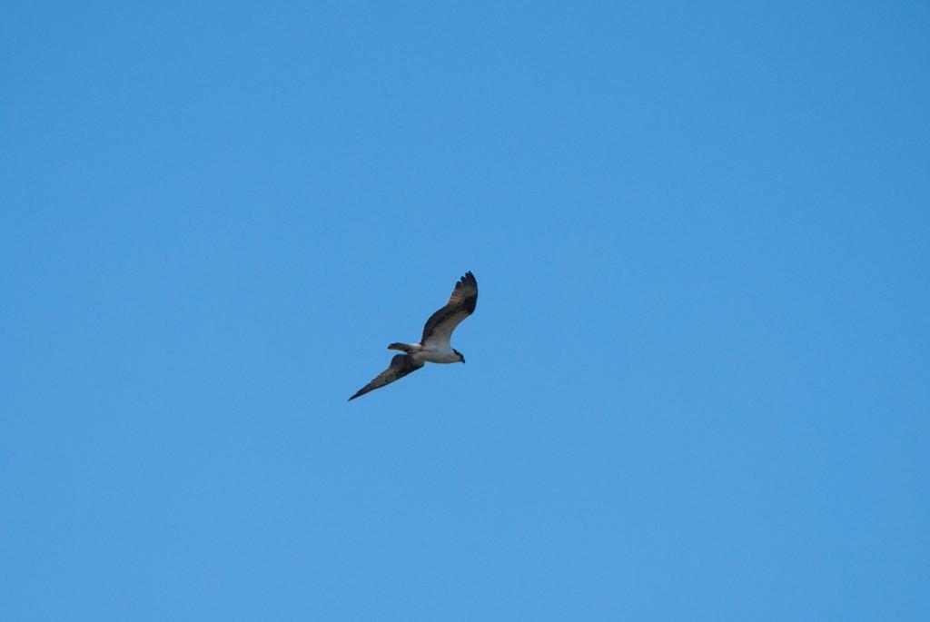 california-birds-34