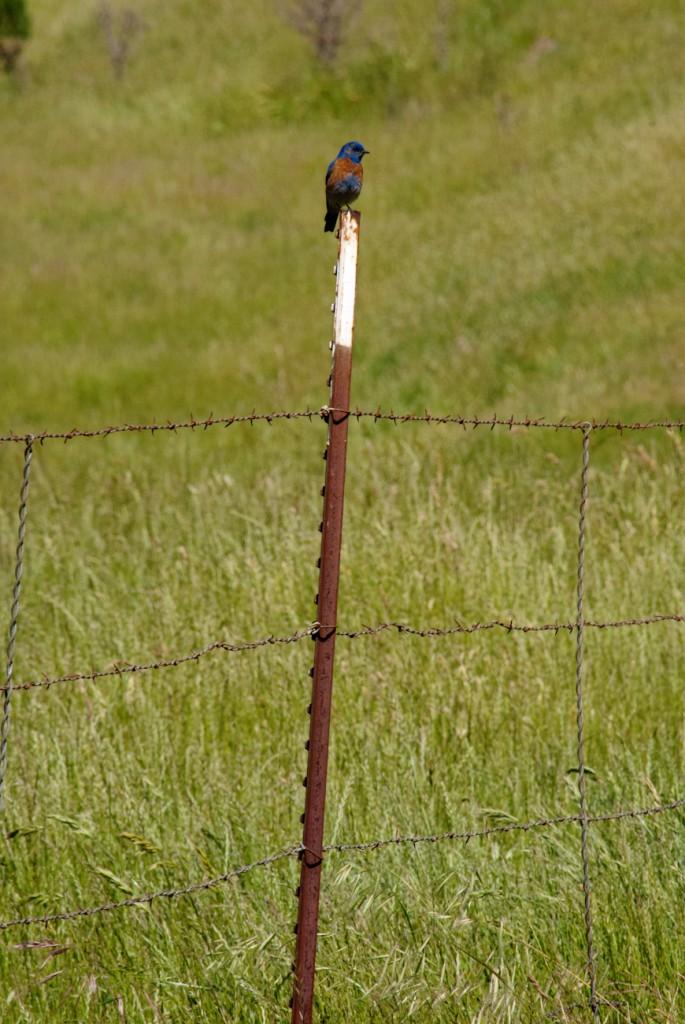 california-birds-4