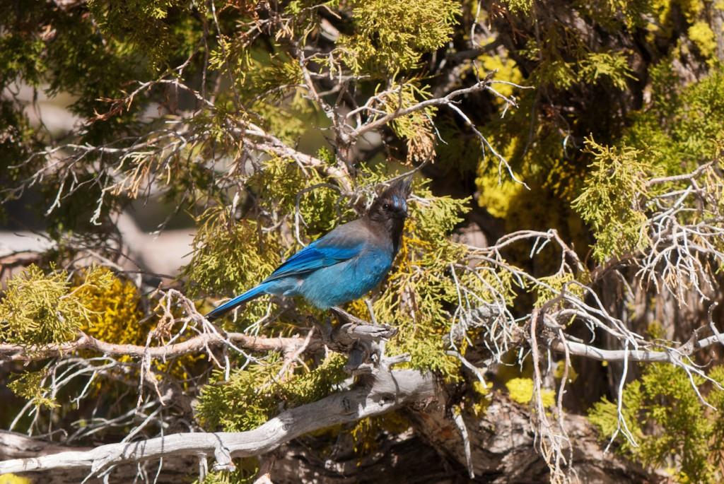 california-birds-5